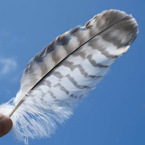 vivre de sa plume - article